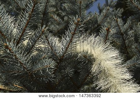 Christmas silvery fir-tree. On a fir-tree festive tinsel is located
