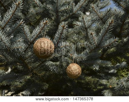 Christmas silvery fir-tree. On a fir-tree gold spheres are located