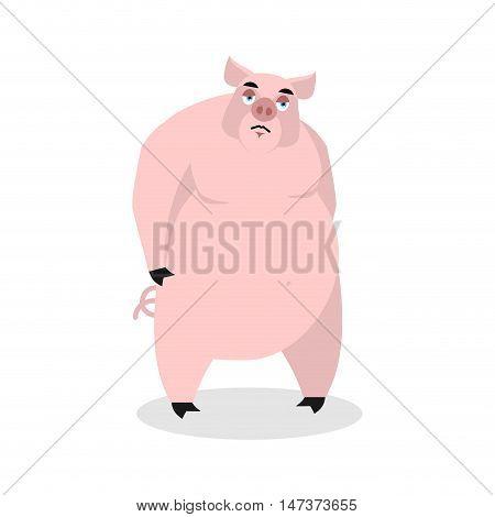 Sad Pig. Big Fat Boar Melancholy.  Sorrowful Hog. Animal Lowered His Head. Farm Beast In Depression
