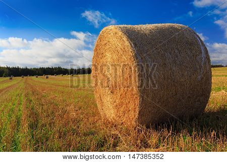 Hay bales in a farm field in rural Prince Edward Island, Canada.