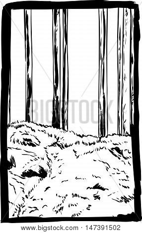 Outlined Forest Trees And Trail