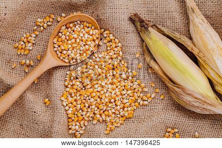 Grains Of Dried Sweet Corn In The Wooden Spoon With Sweet Corn On Hemp Sacks Background .