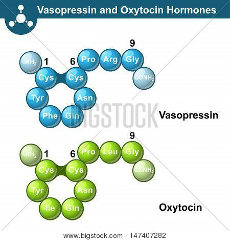 Vasopressin and oxytocine hormones 3d illsutration ball and stick style vector on white background eps 10