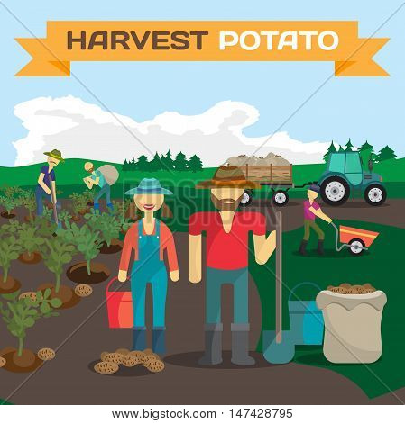 People harvesting potato in a field in the village. Manual labor, tractor with trailer, shovel, bucket, sack, bush potatoes, rural view. Cartoon flat vector illustration
