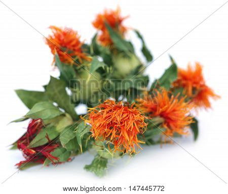Close up of Safflower with leaves over white background