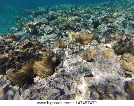 Underwater landscape on a shallow coral reef with calm water surface in the Red sea