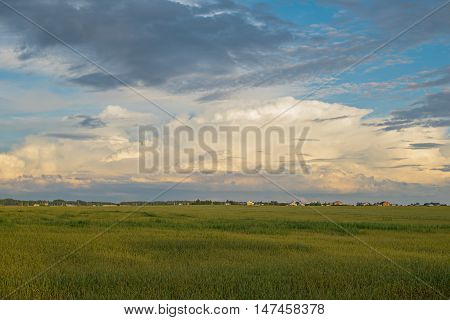 sown green field with houses on the horizon