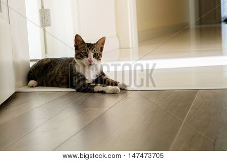 Black and white cat sitting on an open door