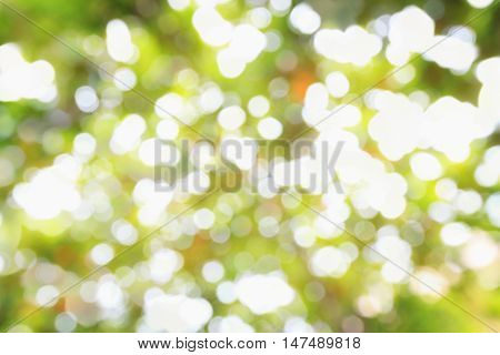 Beautiful nature green bokeh background - Abstract nature bokeh