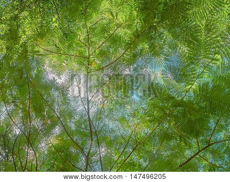 Sunlight filtering through a canopy of green leaves in the forest, viewing from the ground up to the sky through the green foliage.