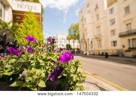 A basket full of purple petunias growing beside a sunny street in central London