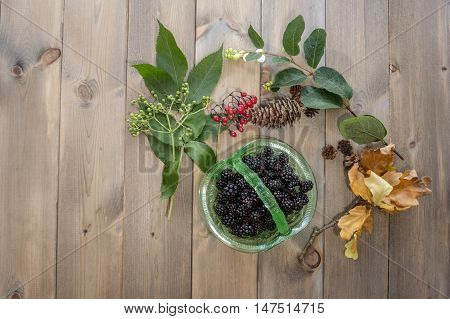 Top down image of hedgerow gatherings. Vintage green glass dish of blackberries surrounded by elderberries bright red bittersweet berries white snowberries pinecones and oak leaves on wooden table.
