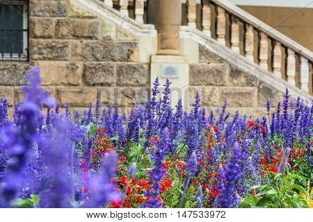 Purple Blue Flowers Lavendar Lilac Field Garden European City