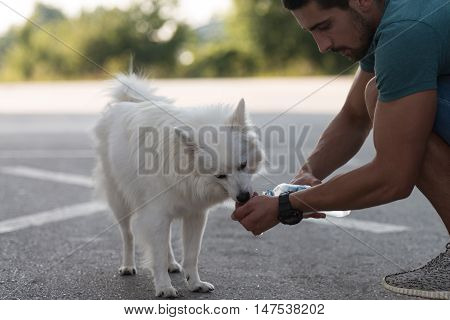 Dog Drinking Water From Hands Of Man
