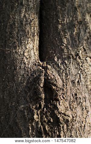 closeup shot of old tree bark texture background that looks like vagina