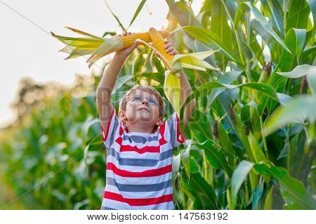 Happy preschool kid boy with glasses holding ears of corn on farm in field, outdoors. Child having fun with farming and gardening of vegetable. Harvest, Thanksgiving Day.