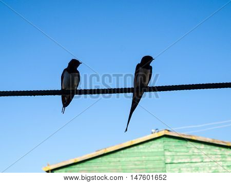Silhouettes of two swallows sitting on a wire against the clear blue sky
