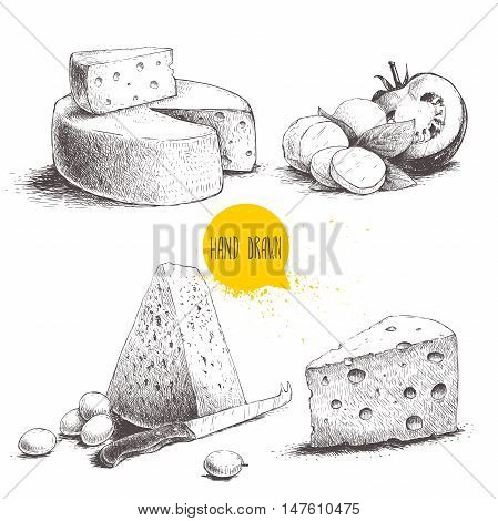 Hand drawn different type of cheese set. Edam mozzarella cheese with basil leafs and tomato round cheese head triangle of cheese. Vector organic food illustration.