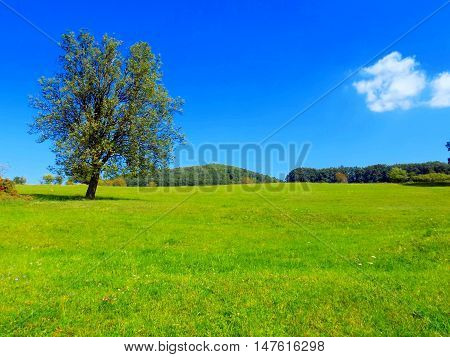 Deciduous tree on big green meadow and deciduous forest in background, blue sky with small white cloud in wild nature during day