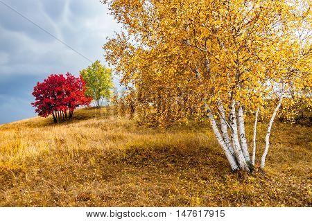 Bashang Grassland. A plateau at Hebei, China.