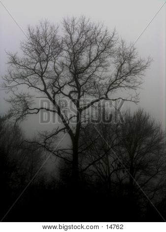 Dark trees in fog.
