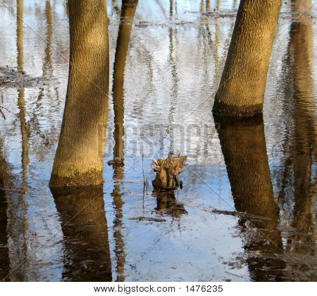 Reflection of bare flooded trees in water poster