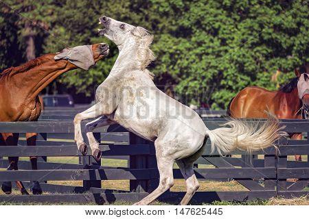 Horse riding on Hilton Head Island South Carolina