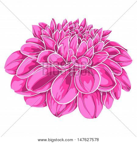 beautiful pink dahlia isolated on white background. for greeting cards and invitations of the wedding birthday Valentine's Day mother's day and other seasonal holidays