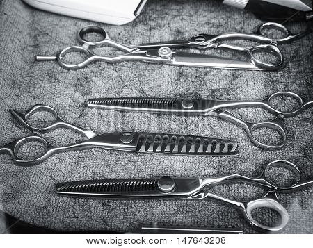 Scissors Hair Salon equipment Black and white Haircut Stylist