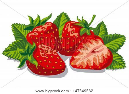 illustration of fresh ripe strawberries with leaves