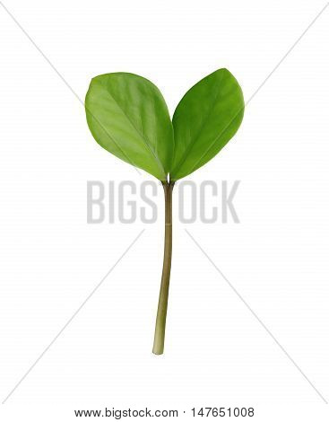 Green sprout tree isolated on white background and have clipping paths.