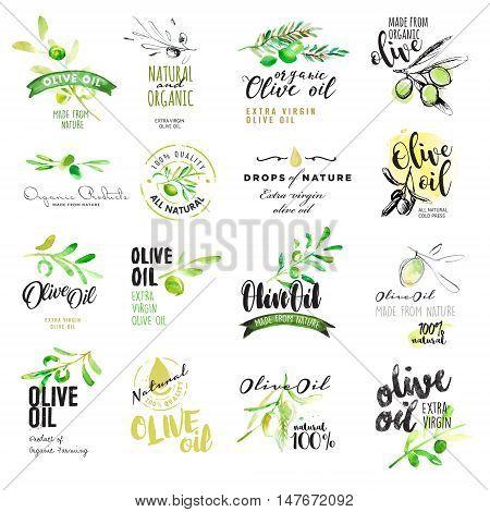 Set of olive oil labels. Hand drawn vector illustrations for olive oil labels, packaging design, natural products, restaurant
