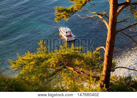 Motorboat in a bay with pine tree at the coast