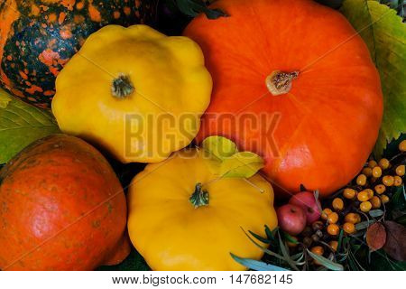 Rustic autumn still life with different pumpkins, top view, bright decorativ background