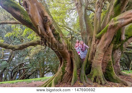 Buttress roots of Moreton Bay fig tree in Albert Park, Auckland, New Zealand