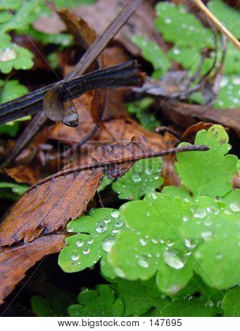Wet Forest Floor
