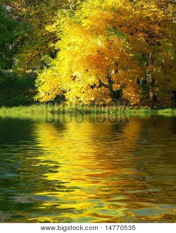 Autumn tree in the forest with reflection on water