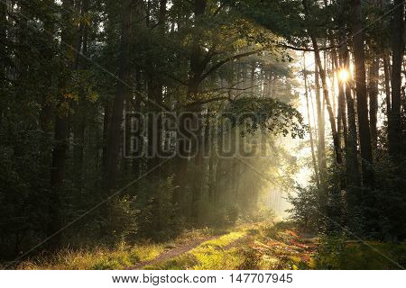 Path through the autumnal forest at dawn.