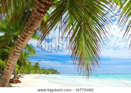 Hermosa playa del Caribe en República Dominicana