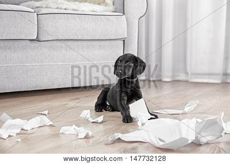 Funny Labrador puppy with pieces of paper on wooden floor