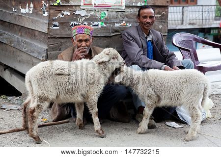 MANALI, INDIA - JUNE 8, 2012: Two men with sheep pose for a photo on the road to Leh in Manali, India