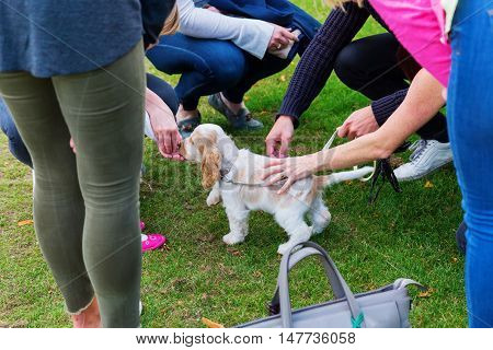 People Stroking A Cute Puppy