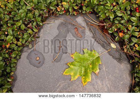 an oak leaf in autumn on a stone