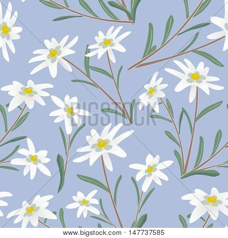 Seamless pattern with edelweiss flowers. Vector illustration.