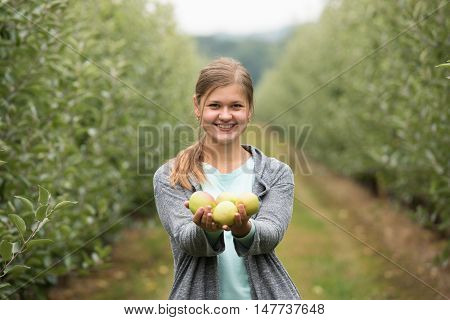 young girl picking up green apples in the garden