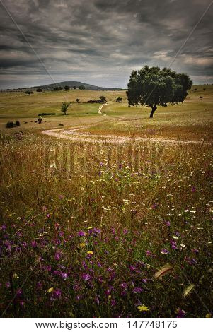 Beautiful Spring countryside landscape with a tree and dirt track