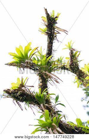 Parasitic Rainforest Plants