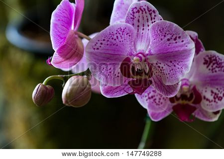 Beautiful Tropical Orchids