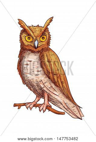 Night owl with big yellow eyes sitting on tree branch. Vector isolated color sketch icon for elements of Halloween decoration design