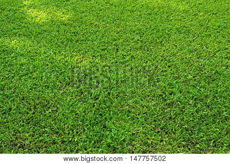 Nature Grass texture / green grass texture background
